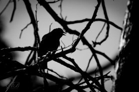 Bird Sillouette by Anne Jones