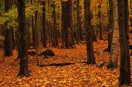 forest-floor-in-fall-by-ken-wilson