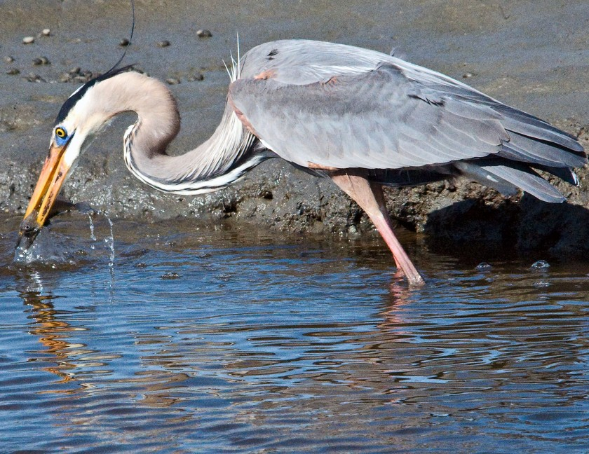 2-march-hints-for-nature-and-wildlife-tips-huntington-beach-8-d2745