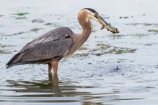 Spear Fishing by Phil Tughan