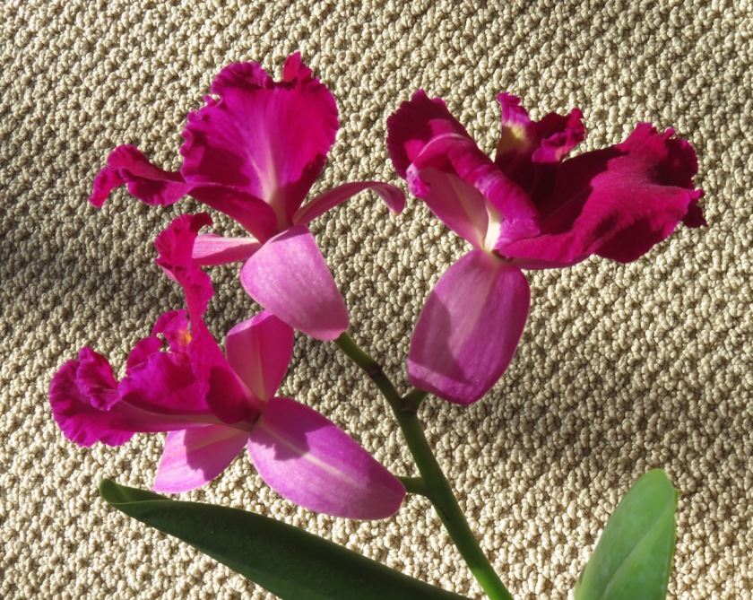 Just Three Orchids by Ann Williams