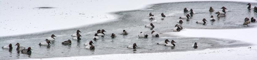 Frozen Niagara River